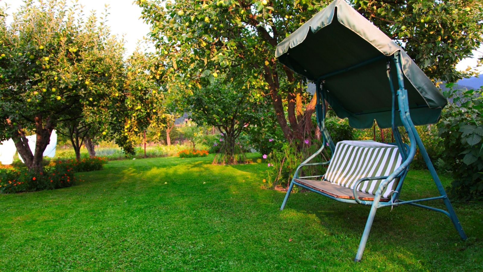 Back garden with swing-chair and apple trees