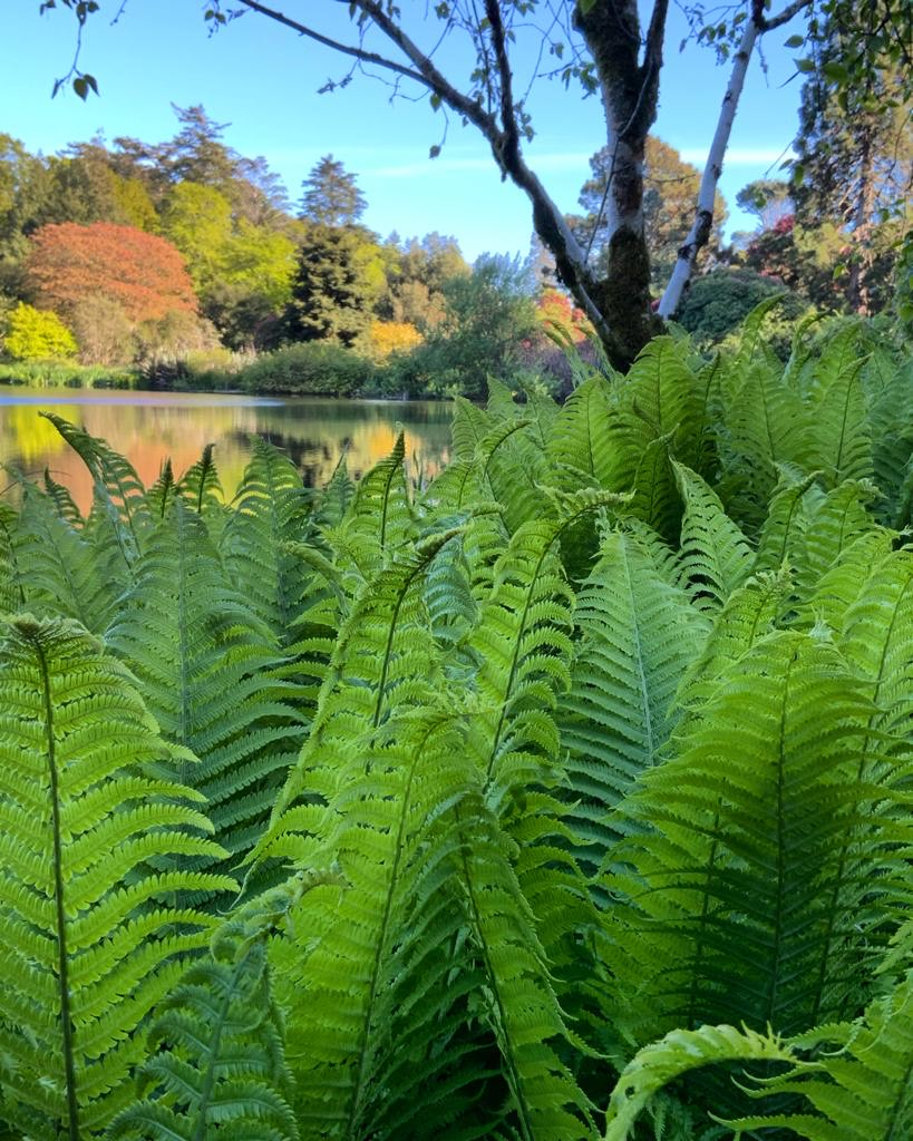 Close up of Mount Stewart ferns with autumnal leaves and lake in background