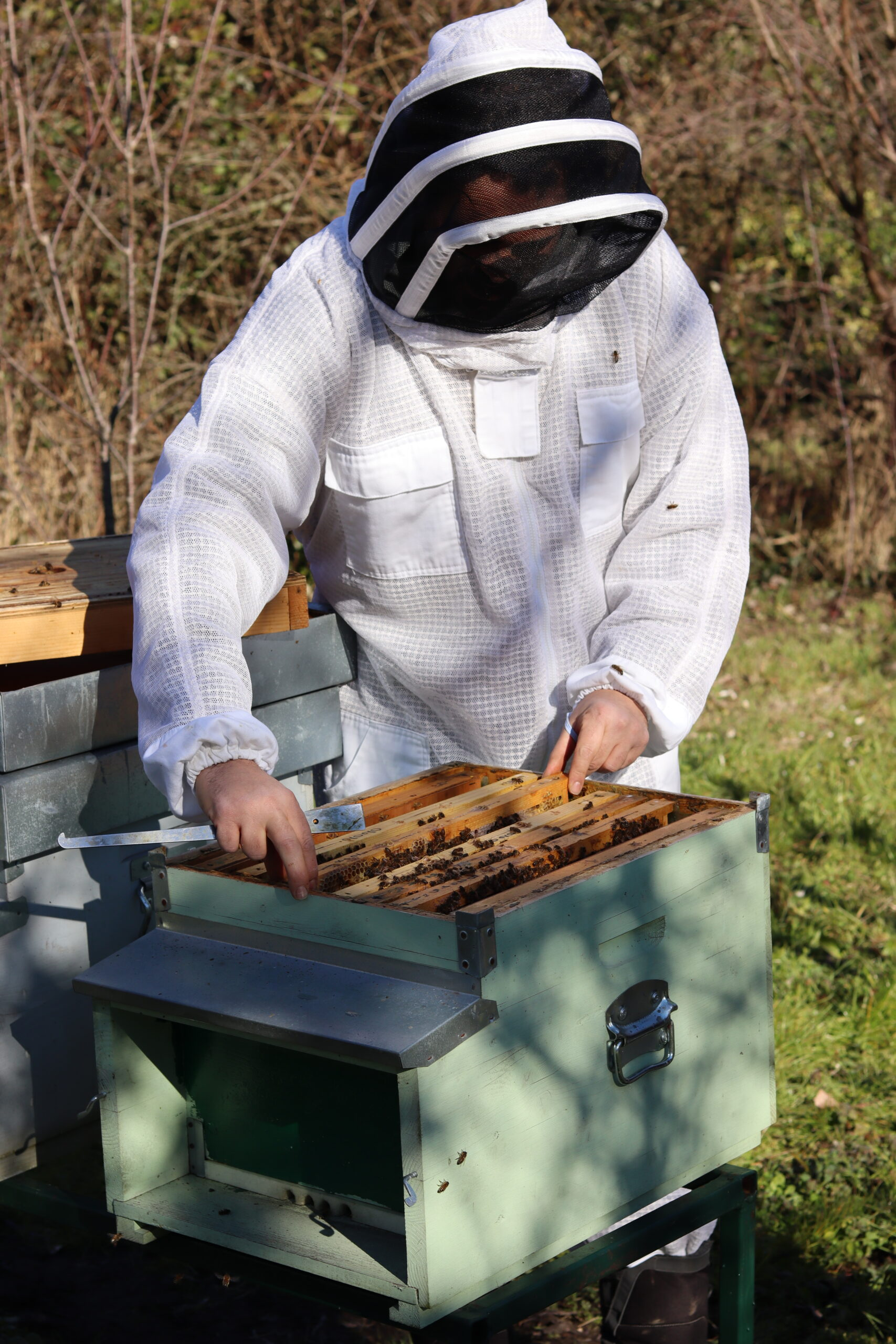 Bee keeper at Miele del Doge working with the bees